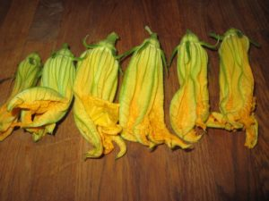 Fresh Squash Blossoms from 2017 CSA